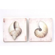 Obraz \SHELLS-wood\ 20x20x3/2dr.